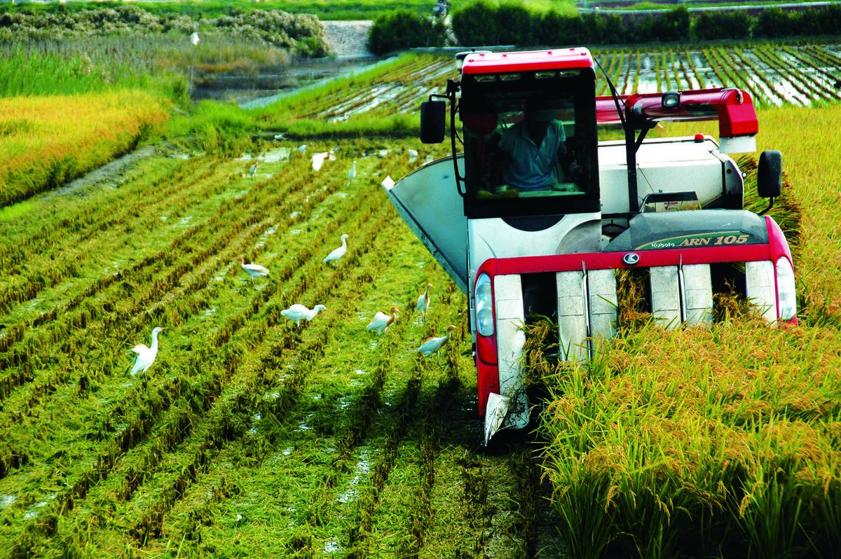 中共為吸引台灣農業,祭出優惠措施,其實是為了取得技術和經驗,最後進一步取代。(中央社)