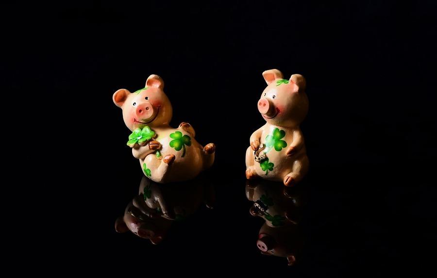 為何說「豬來起大厝」? 亥年說豬諺語