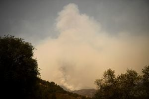 加州野火延燒 著名紅杉林面臨威脅