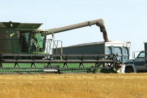 世界多國禁止糧食出口,有觀點認為中國糧食存大量缺口。圖為農民正在裝卸糧食。(AFP)