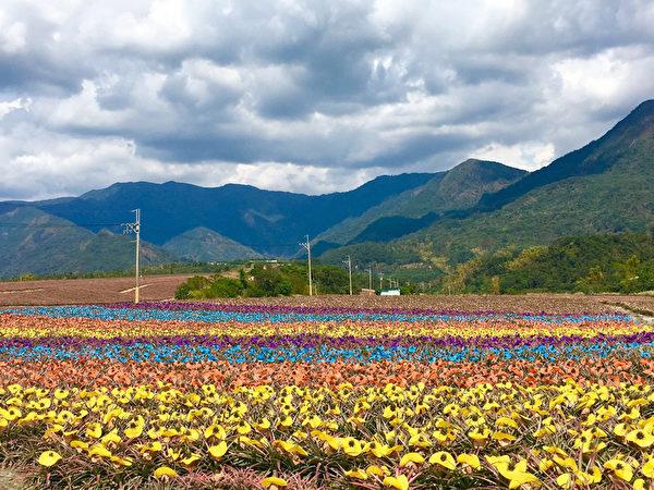 台灣屏東沿山公路菠蘿的田。(中央社)