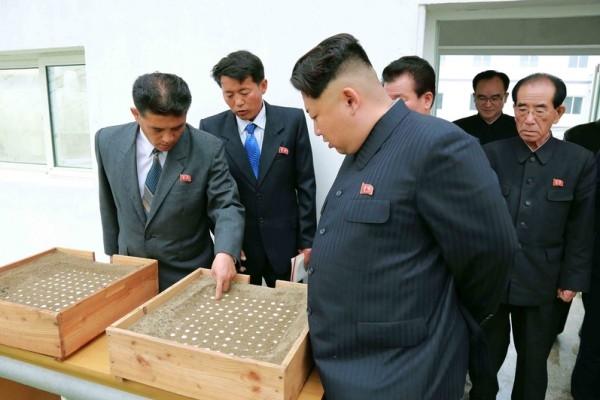 由於金正恩的恐怖政治,使得北韓幹部們總是提心吊膽怕被清除,患有高血壓與糖尿病等「心病」的幹部越來越多。(KCNA VIA KNS/AFP)