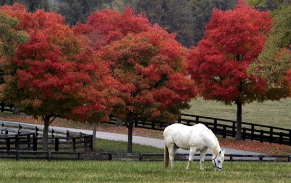 美國,一匹孤立馬在列克星敦吃草,深秋溫度下降,圍繞在牧場的樹木已經改變了膚色。(AFP/Getty Images)