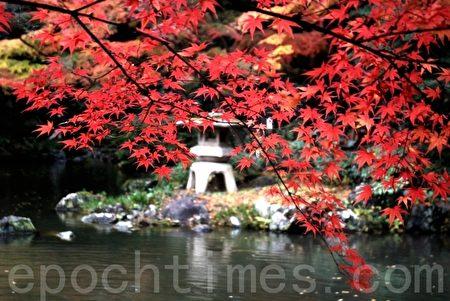 深秋紅葉滿枝。(木雨/大紀元)