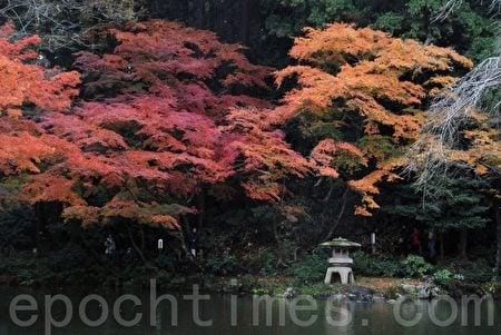 秋風蕭瑟天氣涼,草木搖落露為霜。 (木雨/大紀元)