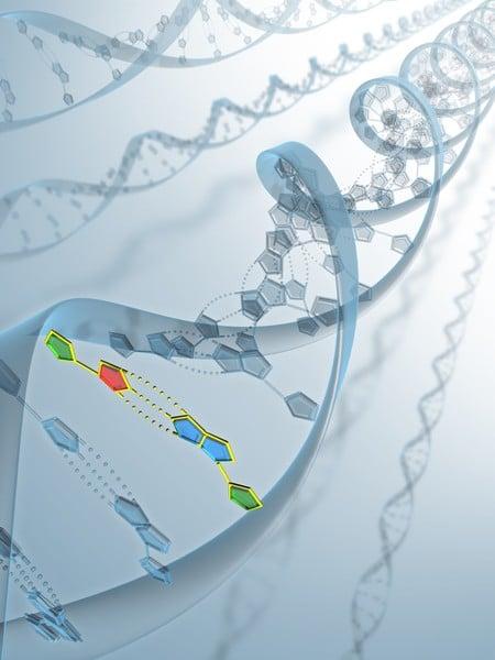 DNA具有特殊的雙螺旋結構。(Fotolia)