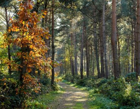 曲徑通幽處,鳥鳴林愈靜 。(Pixabay)