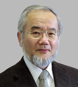 2016年諾貝爾醫學獎由日本科家家大隅良典(Yoshinori Ohsumi)一人獲得。(AFP PHOTO)