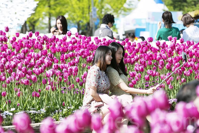 韓國高陽花卉博覽會繽紛登場