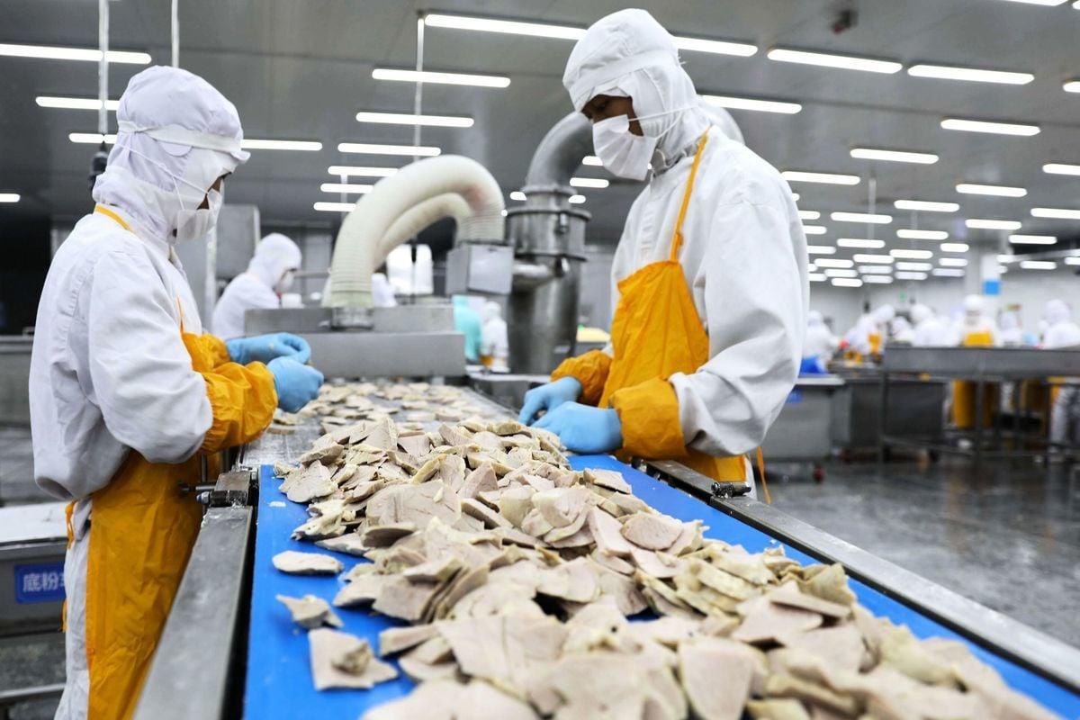 9月12日,中共農業農村部發出通知:與發生非洲豬瘟疫情省相鄰的省份暫停生豬跨省調運。圖為2018年7月19日山東省榮成市一家食品廠在加工豬肉。(AFP/Getty Images)