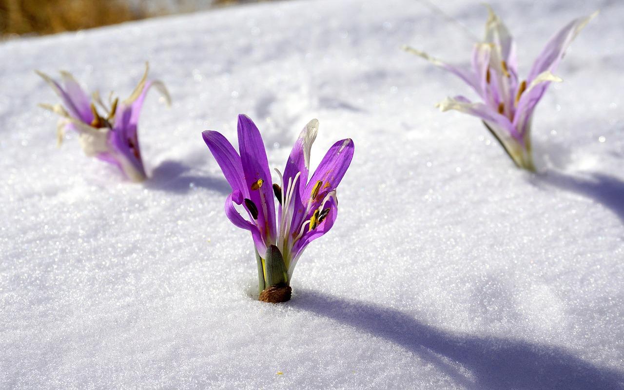 冬藏養精蓄銳,活力迎來春。(pixabay)