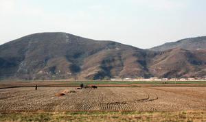 日媒:北韓出現饑荒跡象 農民糧食短缺