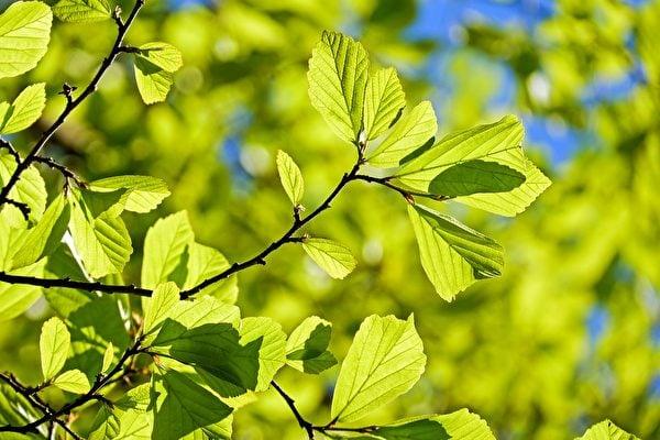 春天是生發的時候,此時應如何調養身心呢?一天也分四季,要如何順應四時養生,身體才能更強健。(Pixabay)
