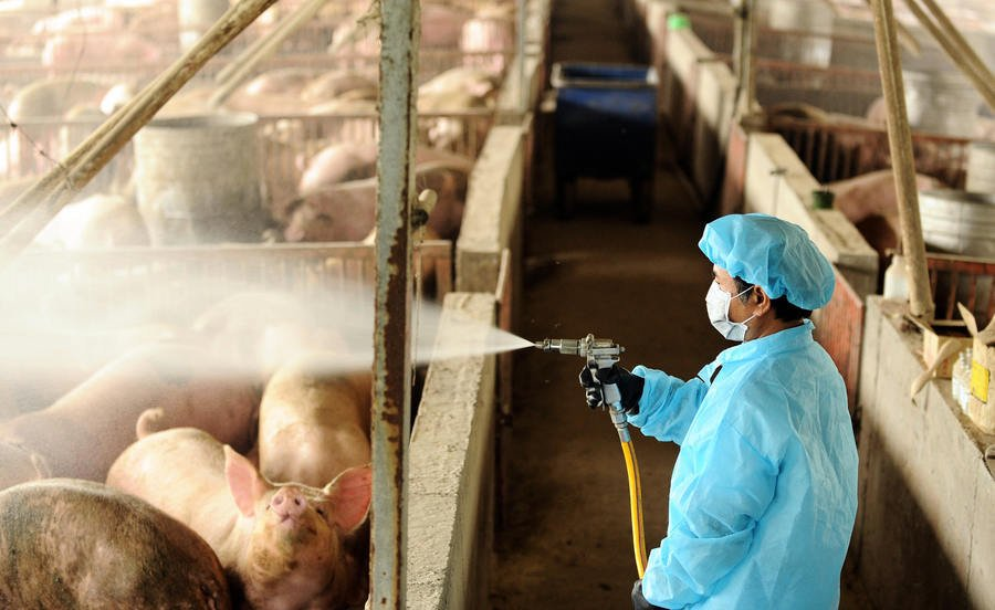 大陸專家稱在中國發現可傳人的豬流感病毒