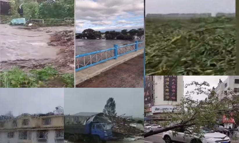 大陸東北地區近期剛經歷「巴威」颱風,又遭遇「莎美克」,狂風驟雨襲擊東北,黑龍江省、吉林省的粟米被撲倒在地。(影片截圖合成)