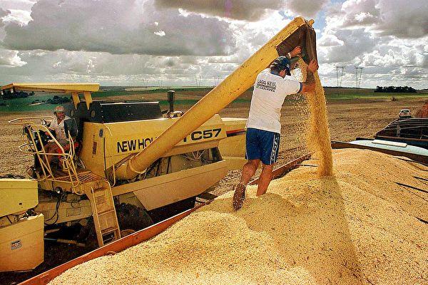 美中貿易戰下,目前阿根廷代替中國,已成美國大豆的最大買家。(NANI GOIS/AFP)