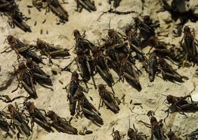 全球恐現糧荒 中共發通知要「蟲口奪糧」