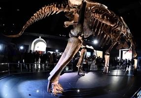 距今1.4億年 阿根廷出土最古老泰坦巨龍