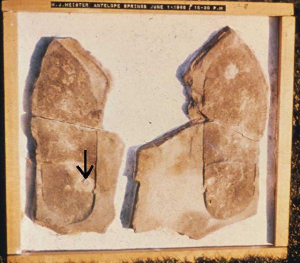 1968年,三葉蟲腳印化石在美國被發現。三葉蟲是距今5.6億年前寒武紀出現的遠古動物,在距今2.4億年前的二疊紀完全滅絕。化石的發現和進化論理論產生了嚴重的衝突。圖為三葉蟲腳印化石。(明慧網)