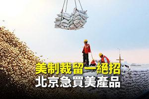 【新聞看點】美制裁留一絕招 北京急買美產品
