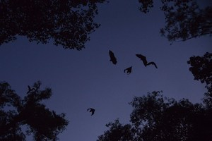 病毒溯源 中共為何阻外媒靠近雲南蝙蝠洞