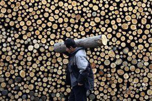 大陸木材價格漲不停 部份傢俬廠被迫關門