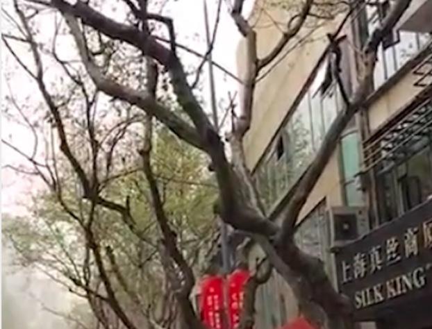 上海沙塵北京陰霾外加日暈 11省區再現沙塵