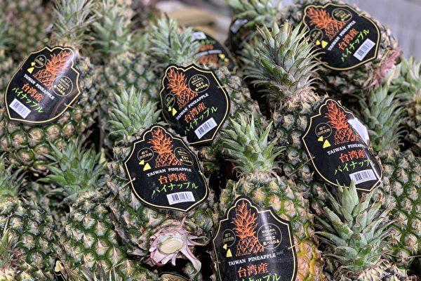 中共日前宣佈自2021年3月1日起暫停進口台灣菠蘿,日本菠蘿訂單卻暴增,甚至有日本民眾因為台灣於311大地震伸出援手,希望能透過支持台灣菠蘿表達感謝,甚至還有人說想要捐錢給台灣農民。(屏東縣政府提供)