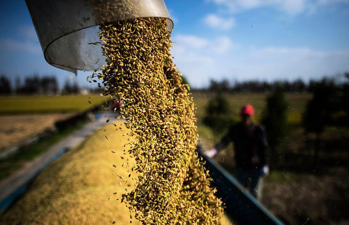 2020年1到12月中國糧食累計進口14,262.1萬噸。(JOHANNES EISELE/AFP via Getty Images)