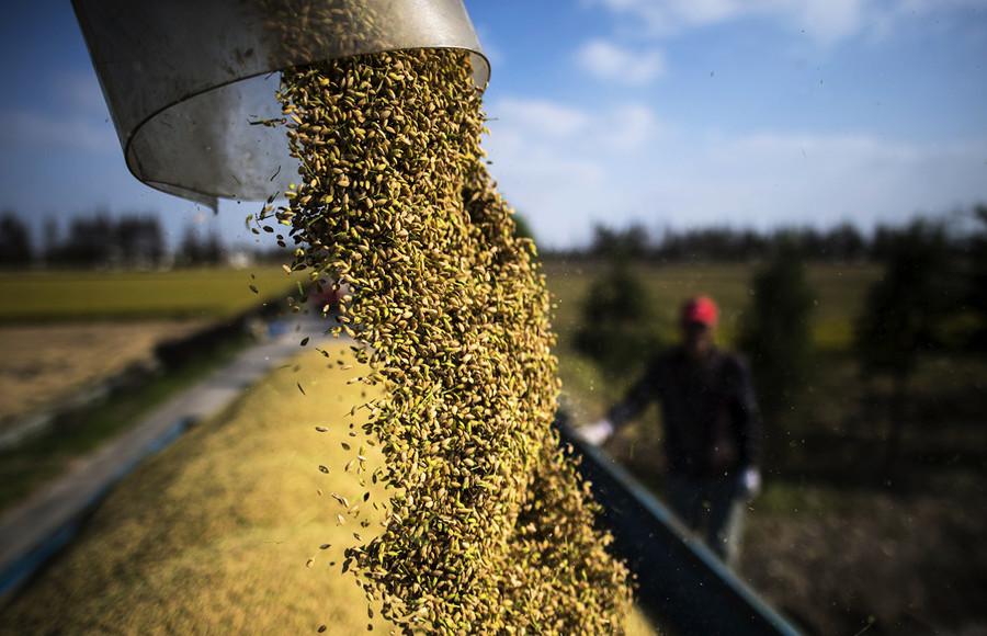 王赫:可疑的2020中國糧食進口激增