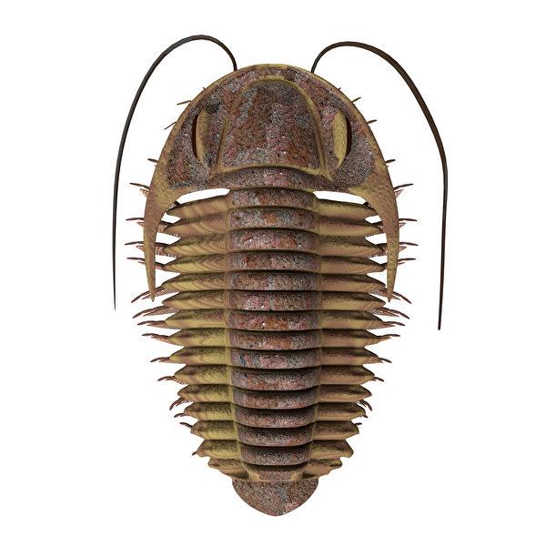 三葉蟲3D示意圖。(Shutterstock)