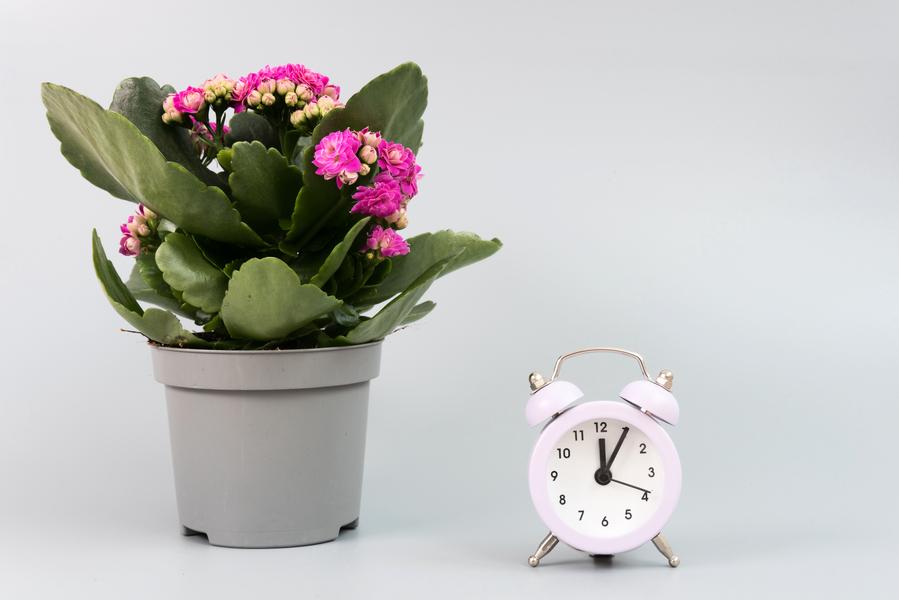 新研究發現植物「睡前」設鬧鐘 以確保生存