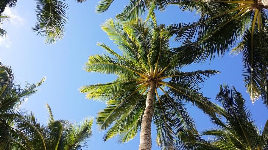 美棕欖樹遭「晴天霹靂」 網民:今年怪事多