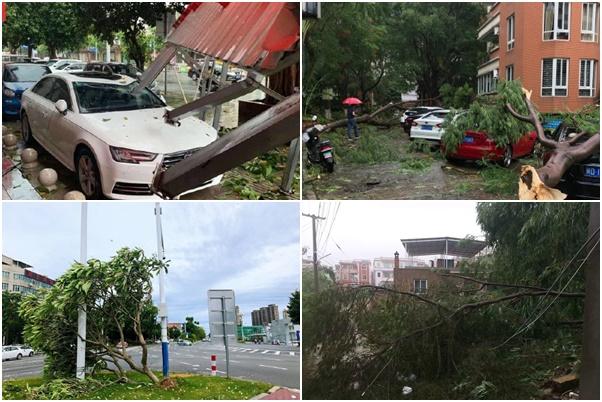 2020年8月11日早,福建漳州遭颱風襲擊。圖為颱風過後的漳州街景。(網絡圖片)