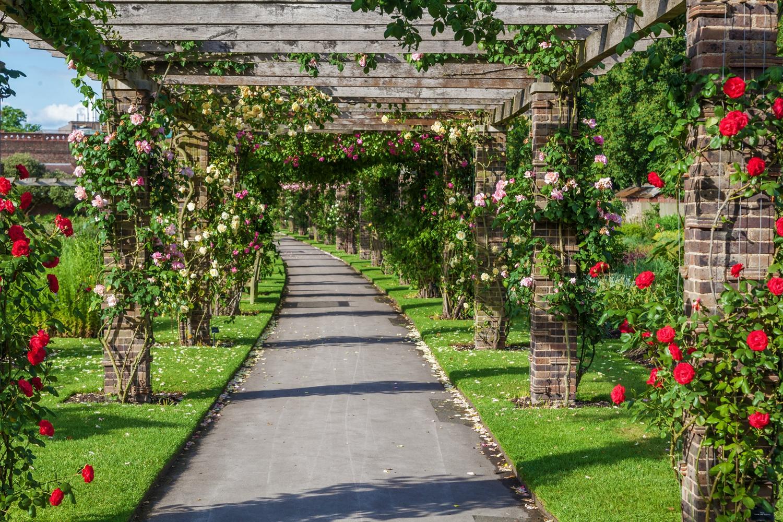 玫瑰園。(Shutterstock)