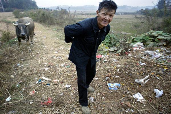 中國南方今年遭受巨大洪澇災害。有農戶表示,年景不好,農作物顆粒無收,損失慘重。而中共不僅不體恤扶持農民,卻加緊在全國範圍內對農民私產宅基地全面徵收使用費,引發底層民眾不滿。圖為湖南省一位農民牽著他的水牛。(FREDERIC J. BROWN/AFP/Getty Images)