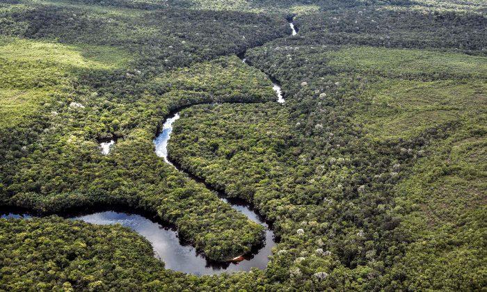亞馬遜雨林。(GUILLERMO LEGARIA/Getty Images)