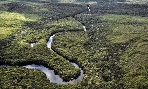 中國進口牛肉激增 消耗巴西亞馬遜雨林?