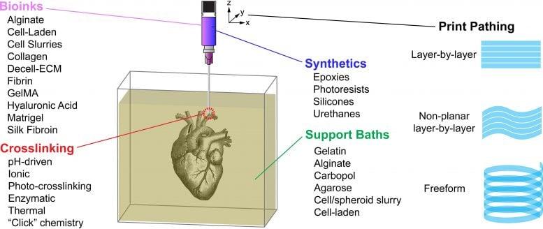 高級三維打印技術 在水凝膠內打印器官