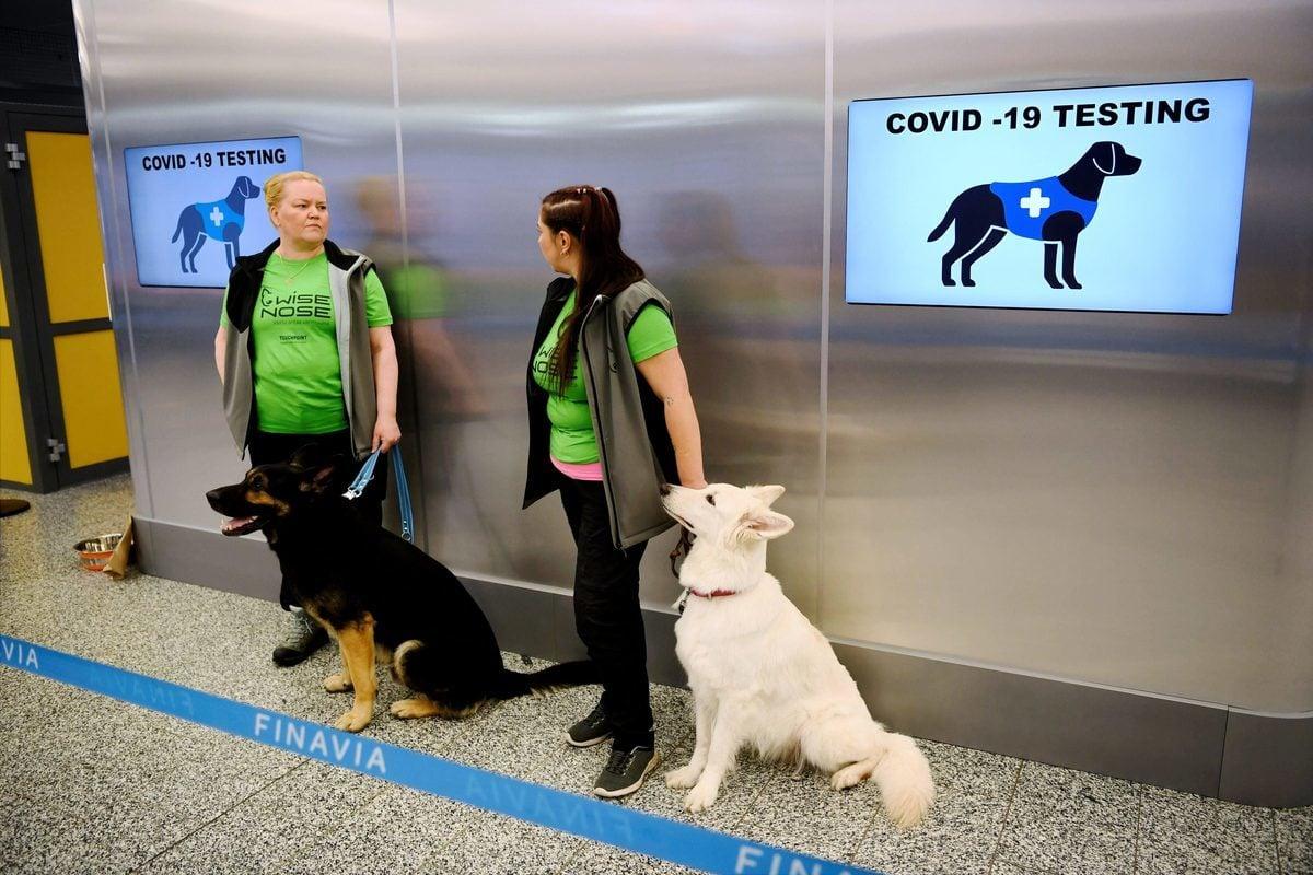 芬蘭赫爾辛基機場從9月22日開始以小狗檢測旅客是否感染中共病毒。(ANTTI AIMO-KOIVISTO/Lehtikuva/AFP via Getty Images)