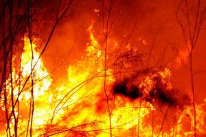 澳洲山火史無前例 各界慷慨解囊 多國援助