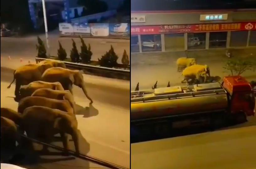 15頭野象夜入昆明市晉寧區 寶夕公路封閉