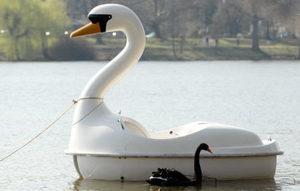 【談股論金】疫後出現幾隻「白天鵝」