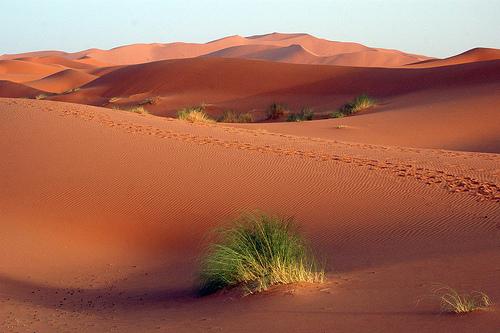 位於阿爾及利亞的捨什沙漠是一片廣闊的沙地,包括複雜的線性和星形沙丘。(Maureen/維基百科)
