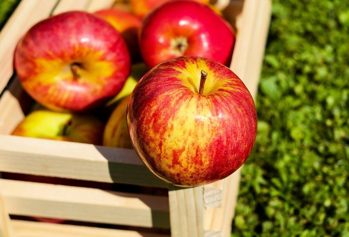 最新一項研究指出,蘋果果皮及果肉均含有促神經元再生物質,能協助身體保護腦神經並促進腦細胞增長,預防各種認知障礙症。(Pixabay)