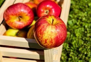 研究:蘋果刺激腦神經增長 有助學習防失智