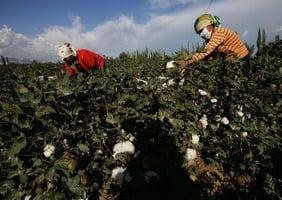 加國新規:產品禁止用於中共侵犯人權行為
