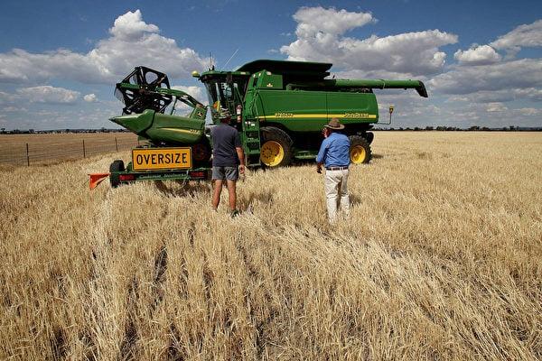 中共對澳洲大麥徵收高額關稅後,澳洲開始積極開拓新市場。(GREG WOOD/AFP via Getty Images)