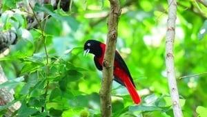 組圖:台灣阿里山生態之美 鳥類繽紛多彩