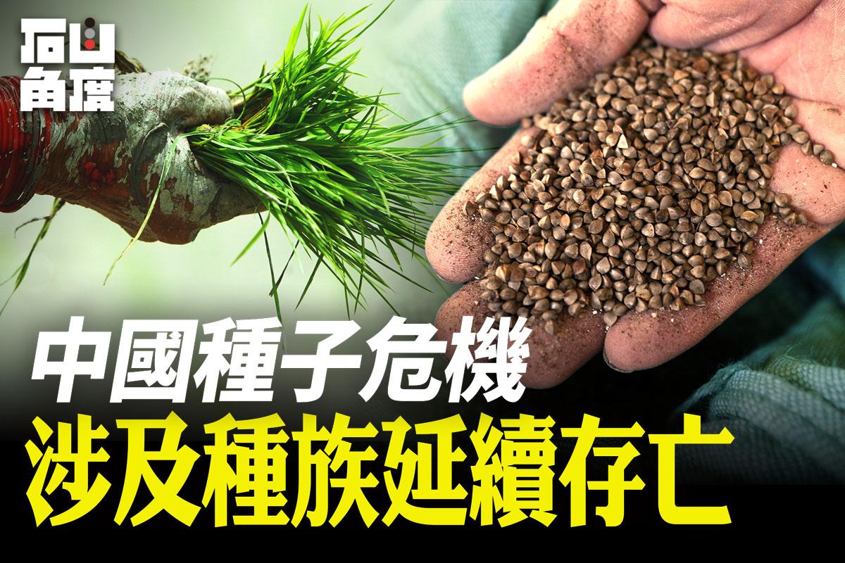 【有冇搞錯】習近平談「種子危機」。農業種子,涉及國家安定甚至整個種族存亡。(大紀元香港新聞中心)